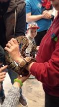 Wir dürfen eine lebende Schlange zart streicheln.